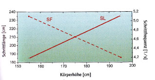 Schrittfrequenz im Verhältnis zur Körpergröße beim Laufen