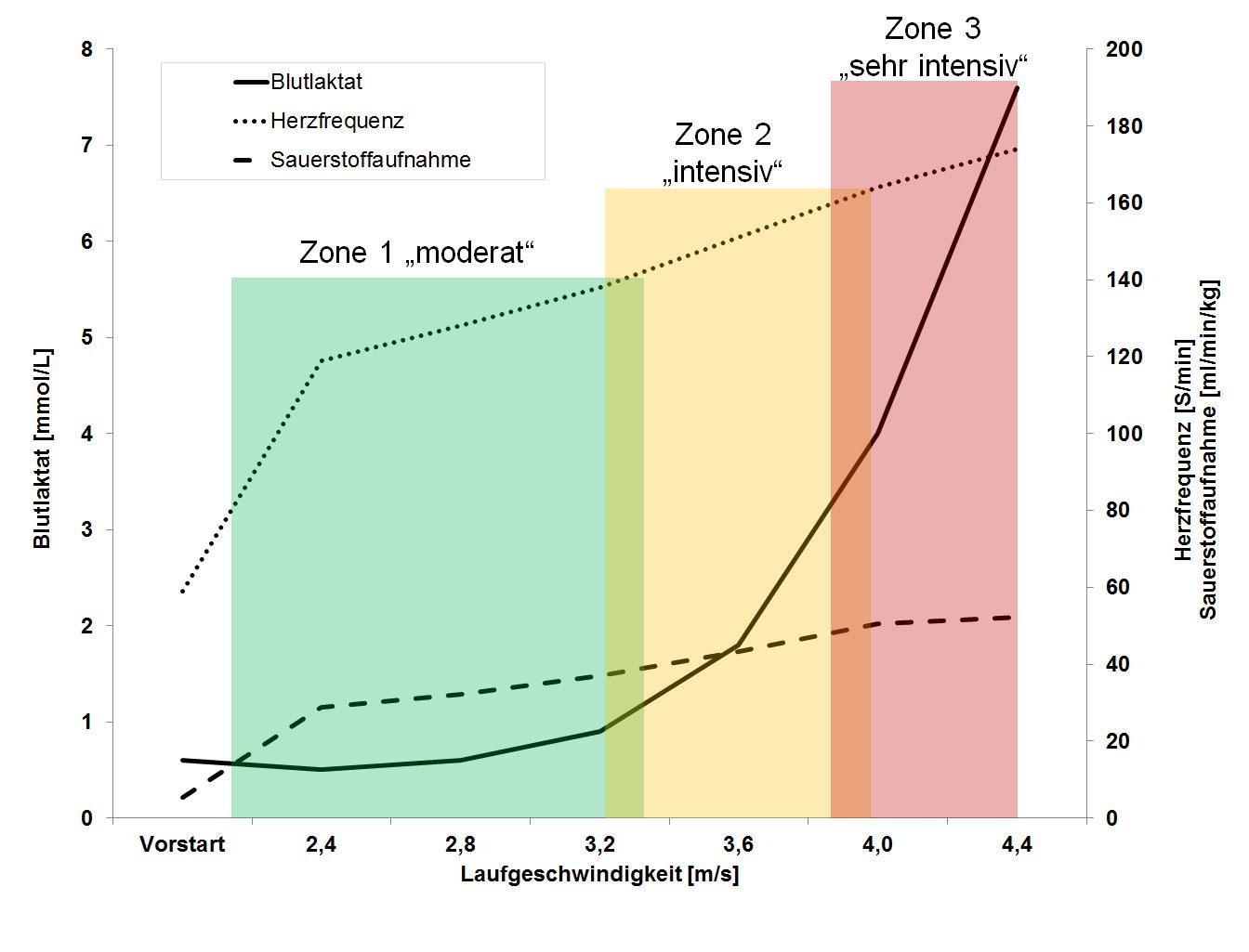 Laktatwerte und Herzfrequenz bei unterschiedlicher Belastungsintensität